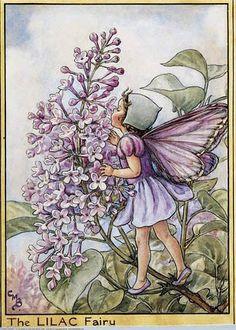 PISCIS, tu perfume Alquímico es el de Lilas