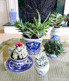A Plant for Every Room #succulents