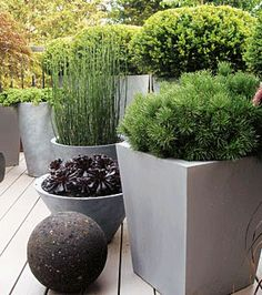 The pot cluster goes modern. Sculptural use of plants in simple geometric pots. Equisetum, Pinus mugo, and a purple Aeonium prove that less is definitely more.