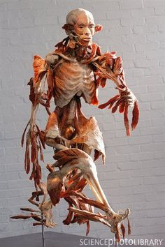 """The Runner"", Bodyworlds exhibit. ""What a piece of work is a man"" ~William Shakespeare"