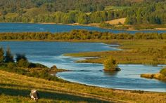 Photo of Loch Duntelchaig, Highlands. Photo of the day, featuring travel and scenery from England, Scotland, and Wales. Free Windows and Mac desktop wallpaper images of UK locations. Fort Augustus, Inverness Shire, North Coast 500, Brown Trout, Fly Fishing, Britain, Scotland, Golf Courses, Scenery