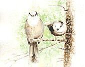 American Redstart bird painting