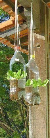 Creative vertical garden using plastic bottles