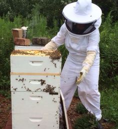 Advice from a Beekeeper: How to Not Get Stung    Keeping honeybees is a lot of fun if you don't get stung. So how do you reduce your risk? For starters, follow the advice of beekeeper Julia Miller. From MOTHER EARTH NEWS magazine.