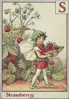 Strawberry Fairy, by Cicely Mary Barker, creator of the famous Flower Fairies, depicting adorable children with fairy wings, frolicking among the gardens and woods. Born in 1895.