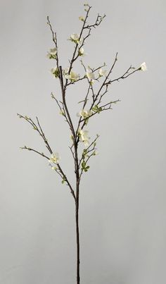 This is a recent love affair with these sort of flower branches.. it looks beautiful in a huge vase almost anywhere in the house!  -Quince Blossom
