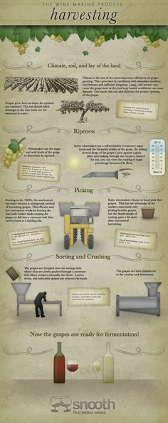 The Wine-Making Process: Harvesting