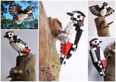 Woody Woodpecker by DeTomaso77  If enough people show their support, a collection of British birds assembled with LEGO blocks, by Thomas Poulsom aka DeTomaso Pantera, a Bristol based bird lover, and enthusiast of the building blocks, could become an official LEGO set.