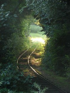 Train tracks woodland forest path nature photography
