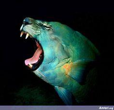 Photoshopped Animal 14 - Photoshopped Animals lion+marineanimal