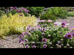 Video of my Green Roof in May 2017