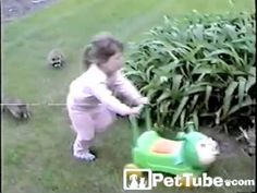 OMG Hilarious! Racoon chase with little girl.