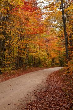 Autumn Road by James Marvin Phelps on 500px