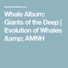 The American Museum of Natural History exhibit looks at how whales' ancestors left land behind for a lengthy dip in the oceans. Whales, Evolution, Deep, Album, Whale, Card Book