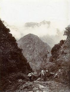 Transporte de pessoa em rede. Interior da ilha da Madeira. início do século XX.