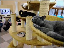 Japan's cat cafes lay on luxury accommodation for their felines