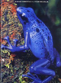 *Scienze ambientali : lavorare con la terra / G. Tyler Miller jr. - Napoli : Edises, c2002. - XV, 551 p. : ill. ; 27 cm.