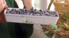 Trnková povidla — Recepty — Herbář — Česká televize Fruit, Cooking, Breakfast, Food, Kitchen, Morning Coffee, Essen, Meals, Yemek