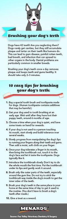 Manage your pet's dental care with these easy tips for brushing your dog's teeth! http://www.menards.com/main/c-19338.htm?utm_source=pinterest&utm_medium=social&utm_campaign=pinsforpets&utm_content=dental-care&cm_mmc=pinterest-_-social-_-pinsforpets-_-dental-care #DogSocialization
