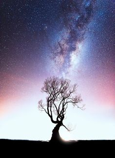"""exploreelsewhere:  """"Something a bit different from this famous tree. [OC] [1489 × 2048] @south_of_home ✈  """""""