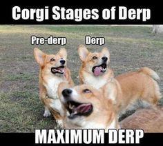 Corgi Derp Stages