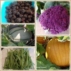 Growing Organic : Organic Prinicples:  The Living Soil