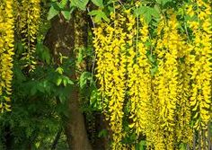 Resultado de imagem para flores naturais amarelas