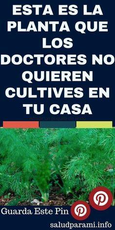 ESTA ES LA PLANTA QUE LOS DOCTORES NO QUIEREN CULTIVES EN TU CASA. #salud #remedy #remediosnaturales #plantasaludable #vegetalsaludable #cultivar #plantasmedicinales