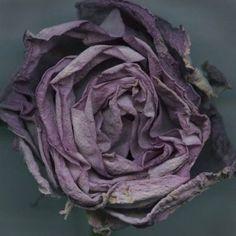 Bruno Fabbris (né en 1960), Rose bleue fanée II. 2007.