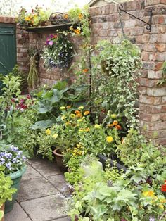 Containers to Maximize Landscape Small space between house and fence - ideal for small ledges, hanging plants.Small space between house and fence - ideal for small ledges, hanging plants. Small Courtyard Gardens, Small Gardens, Outdoor Gardens, Small Space Gardening, Garden Spaces, Small Garden Design, Tiny Garden Ideas, Walled Garden, Garden Cottage
