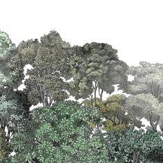 Bellowood wallpaper, black and white forest Collage Landscape, Landscape Elements, Landscape Drawings, Architecture Collage, Architecture Drawings, Plant Illustration, Photo Illustration, Leaf Art, Nature Images