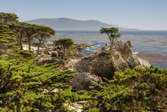 Monterey Cypress in front of the Kelp Forests [2619  1773]