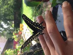 Back angle of 3rd butterfly
