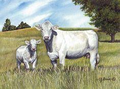 Cattle - C.J. Brown Studios