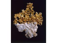 Or natif - Le Buisson d'or - ®MNHN - Laurent Bessol http://www.vogue.fr/joaillerie/a-voir/diaporama/la-reouverture-de-la-galerie-de-mineralogie-et-de-geologie-a-paris/21653#!or-natif-le-buisson-d-039-or-mnhn-laurent-bessol