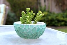 Sea Glass Succulent