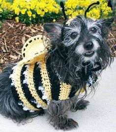 Dog's Crochet Bumble Bee Costume « Free Crochet Patterns Puppy Halloween Costumes, Pet Costumes, Dog Halloween, Bumblebee Halloween, Holidays Halloween, Happy Halloween, Crochet Bee, Free Crochet, Crochet Gifts