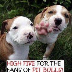 I LOVE PITBULLS !!!