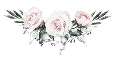 H927 (24) Flower Frame, Flower Art, Watercolor Flowers, Watercolor Art, Graduation Wallpaper, Floral Illustration, Wedding Logo Design, Most Beautiful Flowers, Flower Pictures