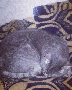 Nighty-night #instacats #instameow #котики #mimimimi #catsofinstagram #catstagram #cats #cutecats #kitten #nicety #коты #котейки #instacats #scotishstrightcat #gato #katzen #neko #chat #twocats #mimimimi  #instaкот #instaкотик #meow #bestmeow #pets #ilovemycat #котэ #instapets #инстакот #котырулят #scotishstright