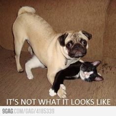 It's not what it looks like ... hilarious!