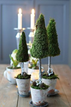 Styrofoam cone tree topiaries - moss and weathered terra cotta pots