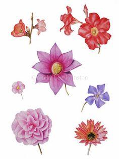Vicki Lee Johnston - Botanical Art: Making colour charts work for you ....
