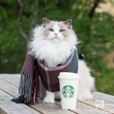 """Kitty Photo From @aurorapurr: """"When you are waiting patiently in the Starbucks line for your"""