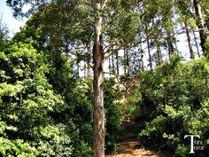 Camino entre los arbustos | El reflejo de mi mirada, + fotos.