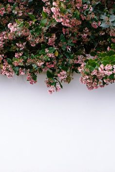 00 the shutterbugs: luisa brimble white wall with pink and green flowers / sfgirlbybay