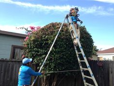 Here you can find all topics about of landscapers in santa barbara and landscaping maintenance services. Enjoy all good ideas for you landscape designed. Family Units, Garden Maintenance, Landscape Services, Santa Barbara, Evolution, The Unit, Hands, Tips, Yard Maintenance