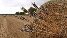 Traditional arrows with barred fletching and horn nock inserts to prevent the arrow from splitting when shot from a longbow...