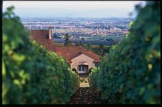 A view of Domaine Drouhin and beyond from the winery's Dundee Hills vineyard.  Image: Kevin Bell