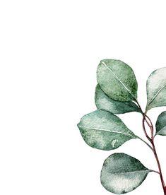 Botanical Wall Art, Botanical Prints, Botanical Decor, Watercolor Plants, Watercolor Paintings, Watercolour, Plant Drawing, Plant Art, Plant Illustration